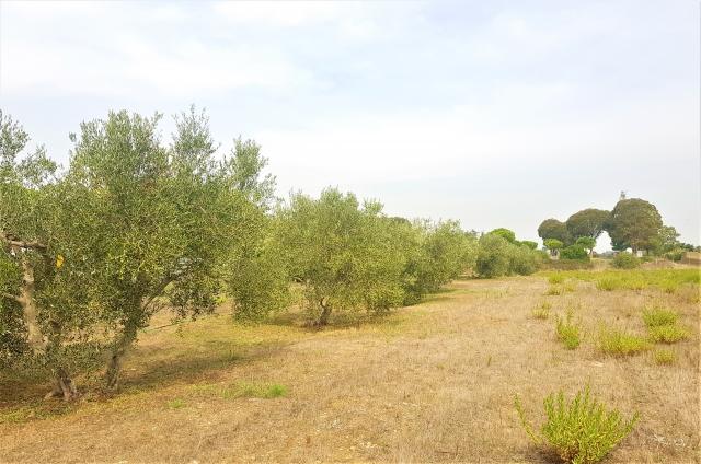 Civitavecchia - Via Terme di Traiano